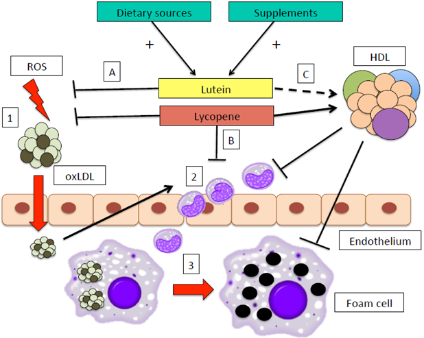 Nutrition ECNU 02 000064 on immune cell