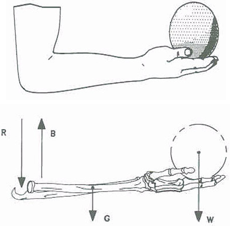 Welcome to ecronicon figure 2 a arm flexed at 90 at the elbow with wrist and fingers rigid holding a ball in palm of hand b free body diagram showing forearm holding a ccuart Images